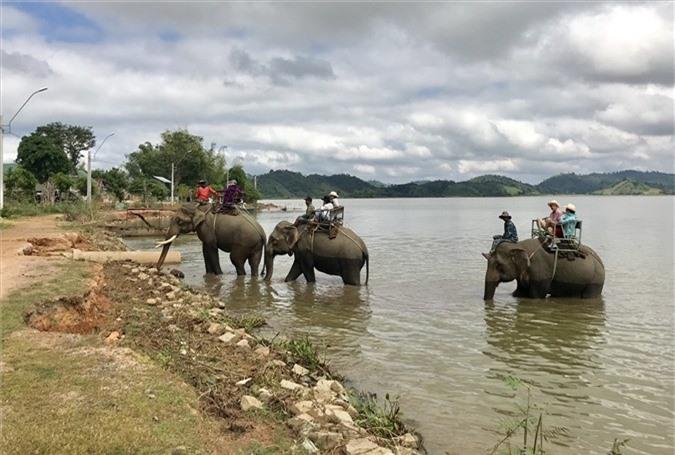 Dịch vụ cưỡi voi trên hồ Lắk. Ảnh: H.V.M
