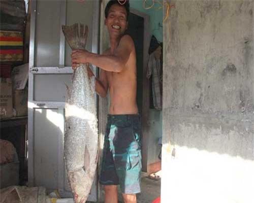Con cá nghi là cá sủ vàng được bảo quản bằng cách đông lạnh. Ảnh: TH.