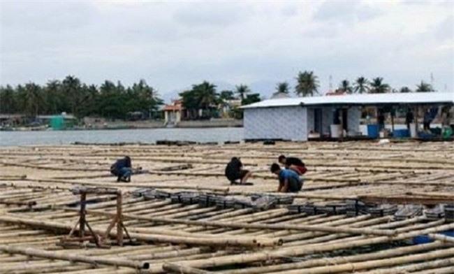 Ngư dân Khánh Hoà tranh thủ chằng chéo lồng bè nuôi thuỷ sản trên biển trước khi rời bè lên bờ tránh bão (Ảnh: TA)