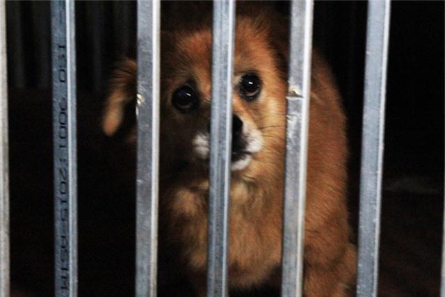 Được biết việc bắt chó thả rông tại phường Khương Đình được thực hiện từ tháng 3/2018. Hàng tuần đội bắt chó thả rông sẽ tiến hành bắt chó thả rông 1 lần vào các buổi sáng sớm hoặc buổi chiều muộn.