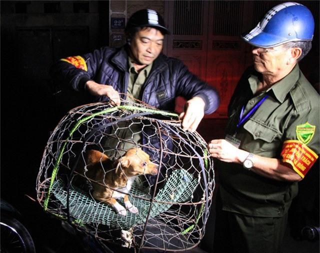 Lúc hơn 6h, đội bắt chó thả rông phát hiện 1 chú chó không đeo rọ mõm và xích nên đã dùng vợt lưới bắt gọn.