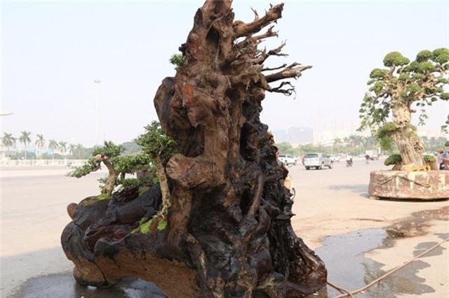 Phần rễ cây đan xen vào nhau tạo nên điểm độc đáo cho tác phẩm.
