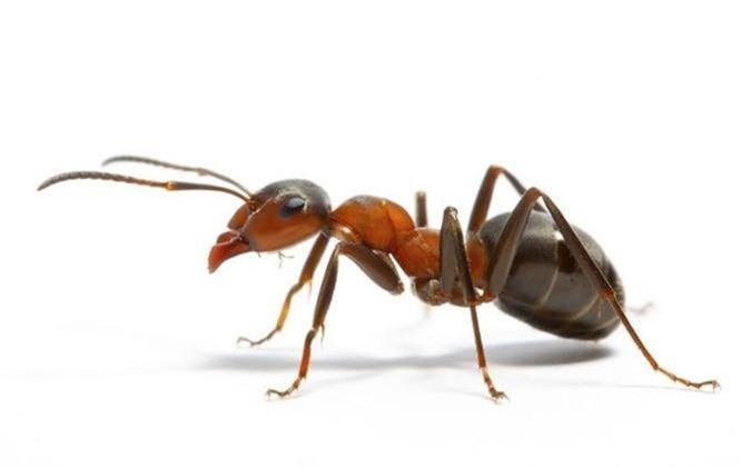 Bạn có biết 10 loài động vật nào thông minh nhất trên hành tinh? - ảnh 10