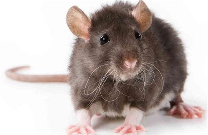 Bạn có biết 10 loài động vật nào thông minh nhất trên hành tinh? - ảnh 3