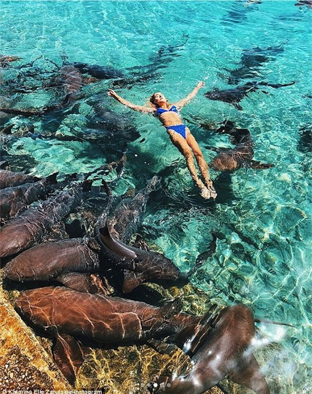 Dịch vụ bơi cùng cá mập rất hút khách ở Bahamas