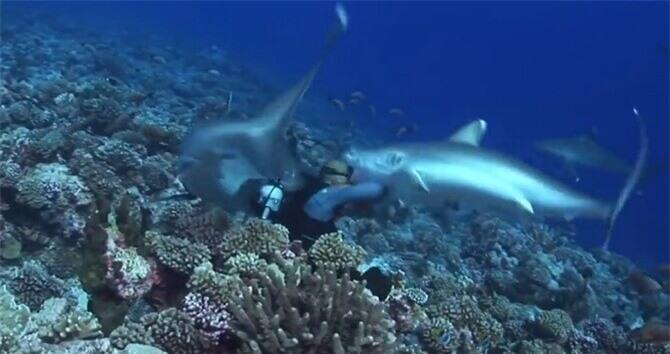 Khoảnh khắc cá mập lao đến cắn nát mặt nạ của thợ lặn.