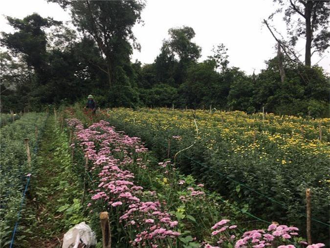 Thời tiết thất thường, nông dân lo trượt vụ hoa tết - Ảnh 3.