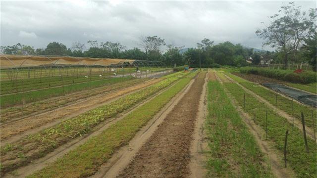Trận mưa lịch sử vừa qua tại Đà Nẵng khiến nhiều diện tích rau của nông dân bị hư hại