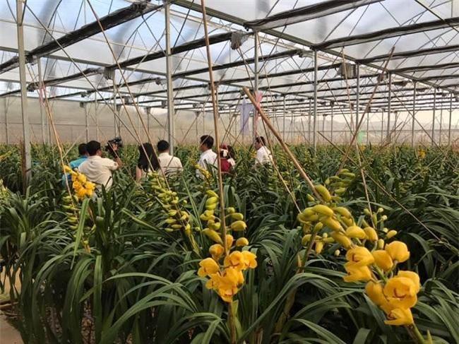 TP. HCM sẽ tìm giải pháp giúp hoa Đà Lạt khoe sắc (Ảnh: HHHĐL)
