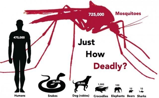 Muỗi là động vật gây ra cái chết nhiều nhất trên Trái Đất