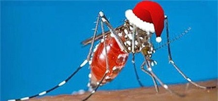Muỗi cũng trốn mùa đông