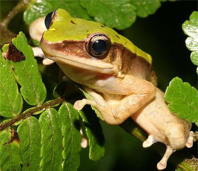 Bạn có thể tìm thấy rất nhiều công viên, khu bảo tồn và một lượng lớn loài động vật hoang dã tại Malaysia.
