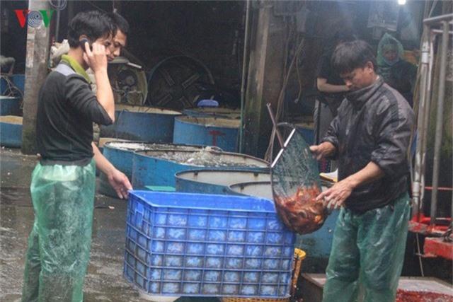 Chợ cá lớn nhất Hà Nội nhộn nhịp trước lễ ông Công ông Táo - Ảnh 7.