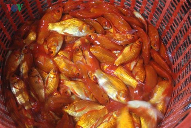 Chợ cá lớn nhất Hà Nội nhộn nhịp trước lễ ông Công ông Táo - Ảnh 8.