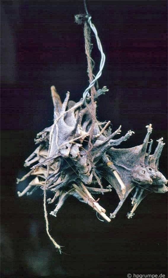 Những con thằn lằn khô treo lủng lẵng cũng dễ dàng mua được trong khu Phố cổ.