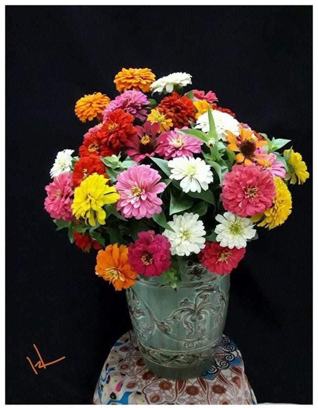 Những loại hoa trang trí nhà mà chỉ cần nhìn thấy là gợi nhớ đến Tết xưa - Ảnh 15.