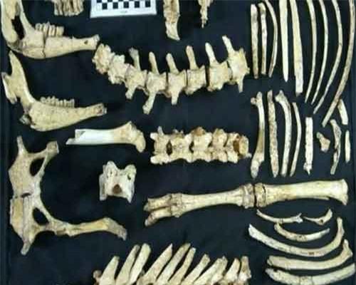 Các mẫu hóa thạch tìm được. (Nguồn: AP)
