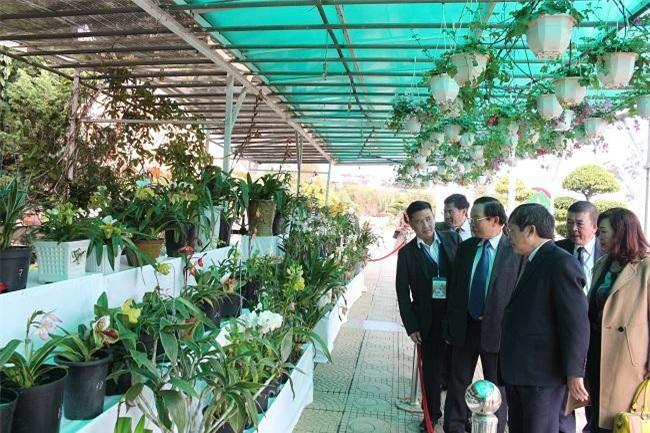 Một số loại hoa lan quý hiếm được các nghệ nhân sưu tầm mang đến trưng bày tại hội hoa năm nay (Ảnh: VH)