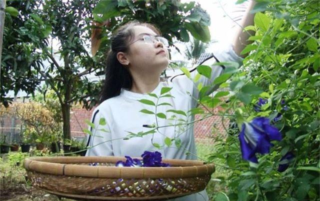 Cô giáo 9X ở làng hoa Sa Đéc khởi nghiệp với trà hoa - 3