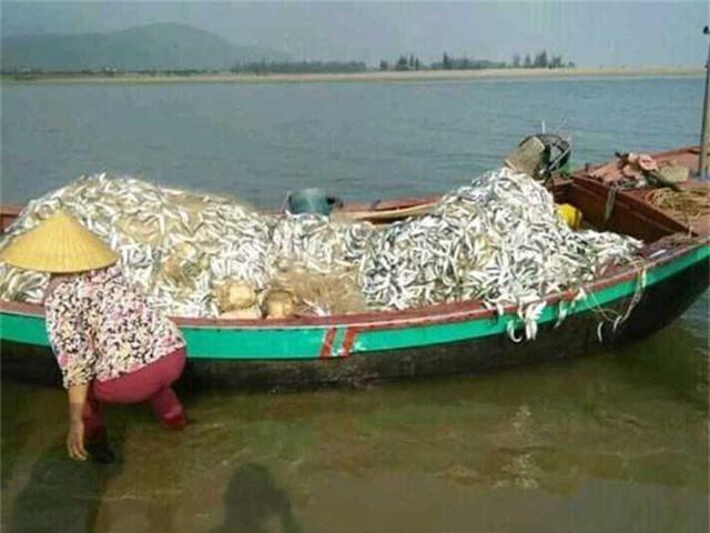 Trúng mẻ cá khủng 100 tấn ngày đầu năm, thu về gần 6 tỷ đồng - 6