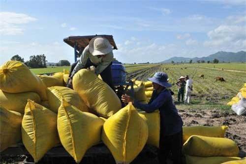Nhiều tình ở miền Tây đã họp bàn tìm giải pháp thu mua lúa cho nông dân. Ảnh: Dân trí.