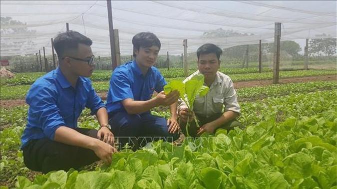 Thủ tục hành chính trong lĩnh vực nông nghiệp được