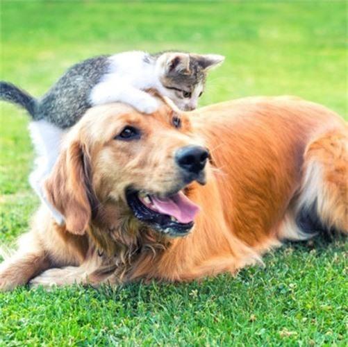 Những căn bệnh nguy hiểm có thể lây từ thú cưng - Ảnh 6.