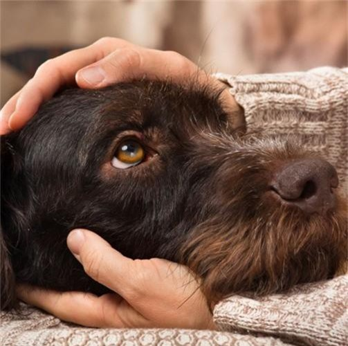 Những căn bệnh nguy hiểm có thể lây từ thú cưng - Ảnh 7.