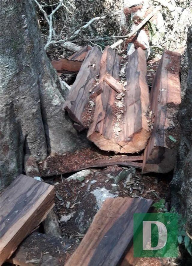 Rừng gỗ quý ở Phong Nha - Kẻ Bàng bị phá chỉ cách đồn biên phòng... 1km - 6