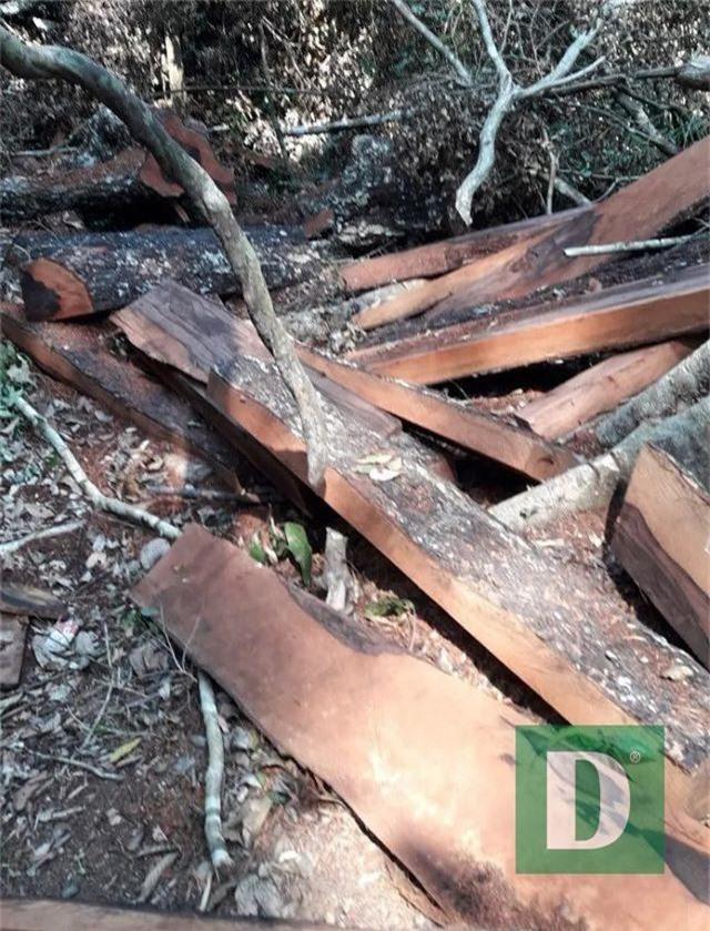 Rừng gỗ quý ở Phong Nha - Kẻ Bàng bị phá chỉ cách đồn biên phòng... 1km - 7