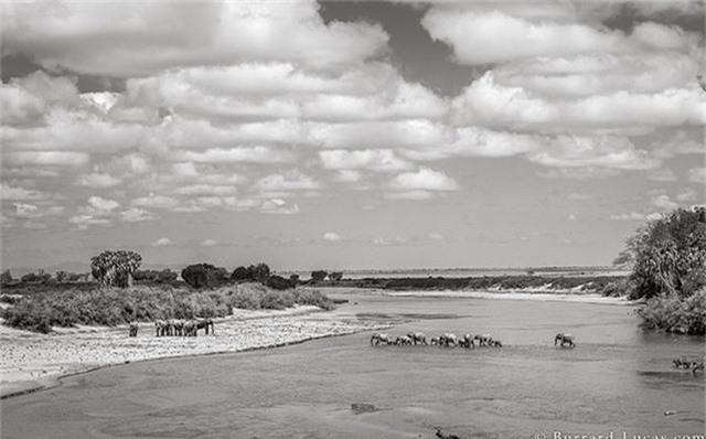 """Những hình ảnh cuối cùng về """"voi nữ hoàng"""" có đôi ngà khổng lồ ở Kenya - Ảnh 8."""