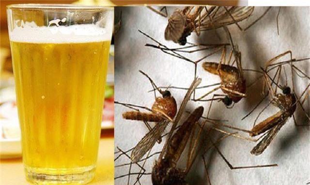 Cách dùng bia khó có hiệu quả trong việc diệt muỗi cái