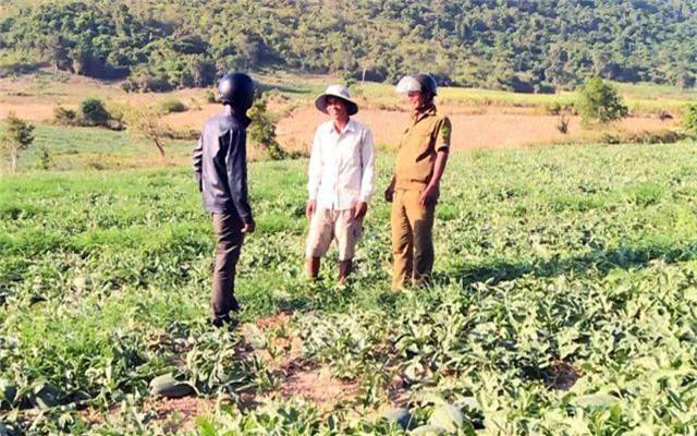 Côn đồ trắng trợn đòi bảo kê, cướp bát cơm nông dân nghèo tại Phú Yên! - 3
