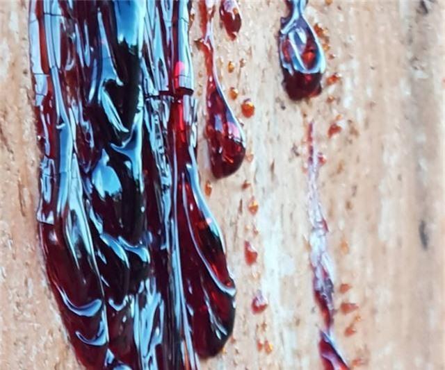 """""""Rùng mình"""" loài cây chảy máu giống con người! - 3"""