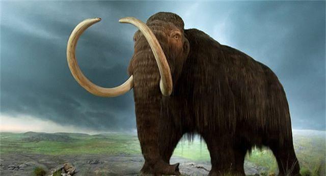 Đột phá trong nhân bản voi ma mút - 1