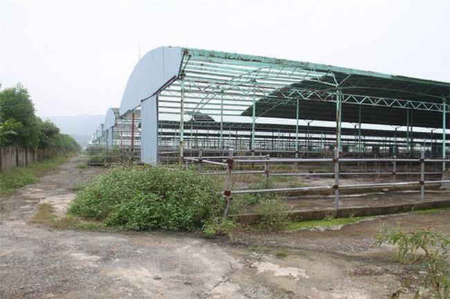 Trang trại chăn nuôi bò của Công ty CP Chăn nuôi Bình Hà tại Hà Tĩnh bị bỏ hoang. Ảnh: Báo Người lao động.