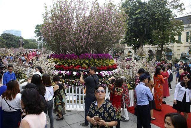 Ngắm hàng vạn cành hoa anh đào khoe sắc bên hồ Gươm - 13