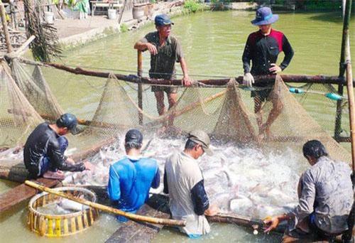 Cơ hội xuất khẩu thủy sản chính ngạch qua Trung Quốc là rất lớn. (Ảnh minh họa: Báo Người Lao động)