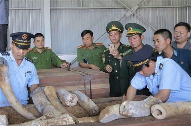 Doanh nghiệp từ chối nhận lô hàng hơn 9 tấn ngà voi giả danh đồ gỗ từ Singapore - 1
