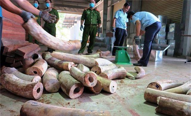 Doanh nghiệp từ chối nhận lô hàng hơn 9 tấn ngà voi giả danh đồ gỗ từ Singapore - 2