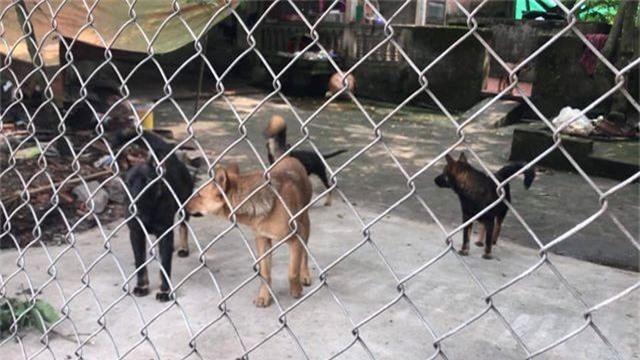 Cục Thú y lên tiếng vụ đàn chó cắn tử vong bé trai 7 tuổi - 3