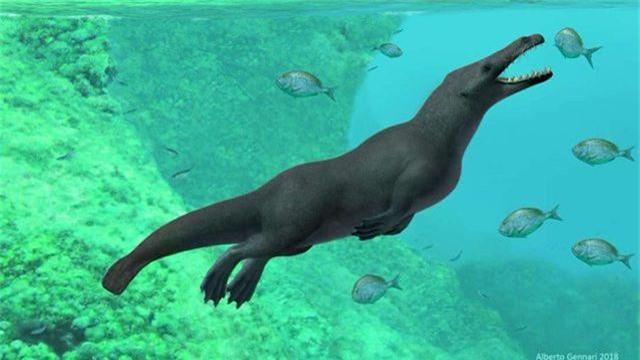 Phát hiện hoá thạch cá voi cổ đại có… bốn chân và đuôi như rái cá - 1