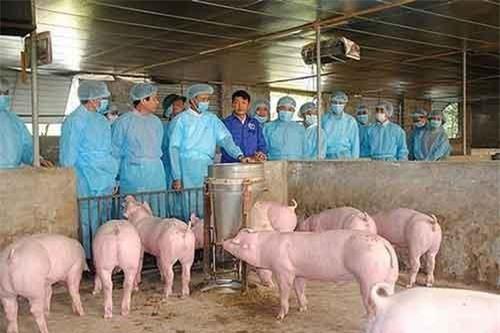 Lãnh đạo UBND TP Hà Nội kiểm tra công tác phòng, chống dịch tả lợn châu Phi tại huyện Đan Phượng. (Ảnh: ANTĐ)