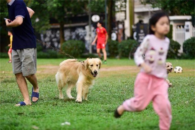 Nhiều người dân Hà Nội quen thả rông chó không rọ mõm - 3