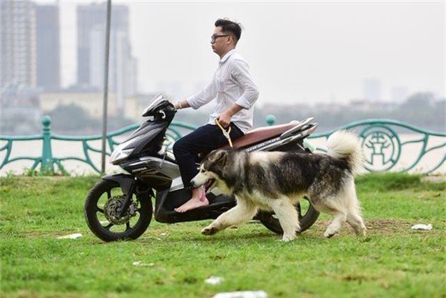 Nhiều người dân Hà Nội quen thả rông chó không rọ mõm - 9