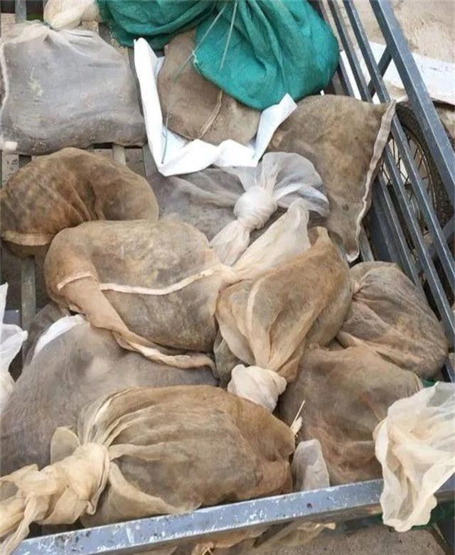 Chặn giữ xe kéo vận chuyển 16 cá thể động vật hoang dã - 1