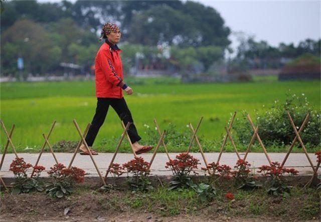 Kênh ngập rác thải biến thành đường hoa ở Hà Nội - 7