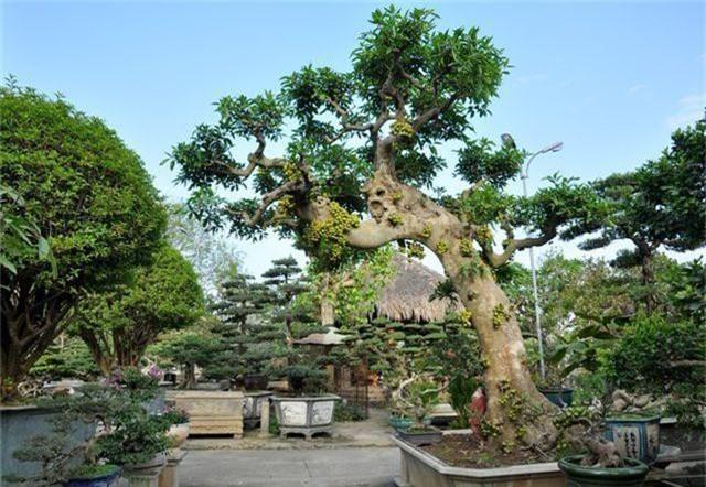 Choáng ngợp những vườn cây triệu đô độc nhất, vô nhị của đại gia Việt - 11