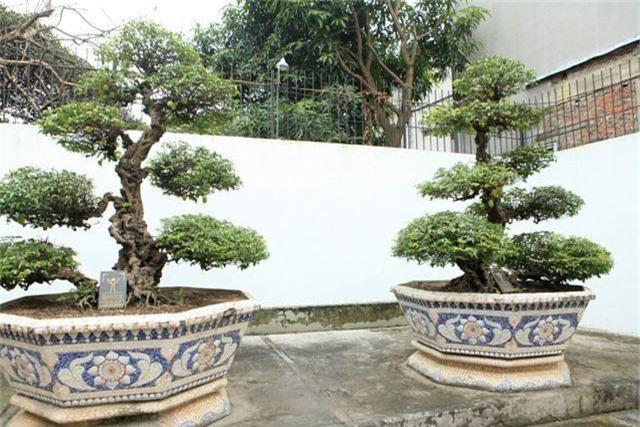 Choáng ngợp những vườn cây triệu đô độc nhất, vô nhị của đại gia Việt - 2