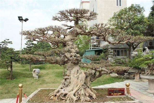 Choáng ngợp những vườn cây triệu đô độc nhất, vô nhị của đại gia Việt - 6